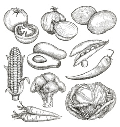 Vegetables sketches hand drawing set vector image