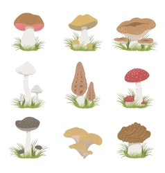 Different mushrooms realistic drawings set vector