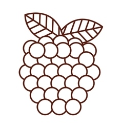 fresh fruit delicious isolated icon vector image