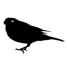 bird silhouette icon eps vector image