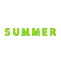 word summer with leaves on a white vector image