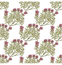colored wild thyme seamless pattern hand drawn vector image vector image