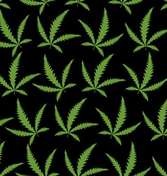 Green Cannabis leafs on a black background vector image