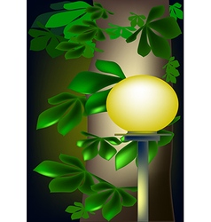 Lantern and leaves of chestnut vector image vector image