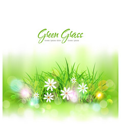 background with green grass and daisies element vector image