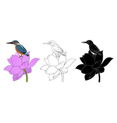 bird is a kingfisher and lotus flowers in color vector image