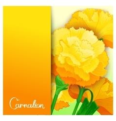 Carnation flowers design vector