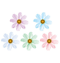 daisy flowers set isolated 3d vector image
