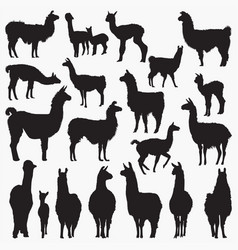 lama silhouettes vector image