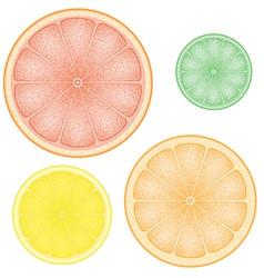 Set of citrus 01 vector
