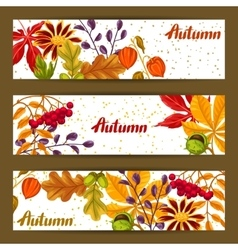 Banners with autumn leaves and plants Design for vector