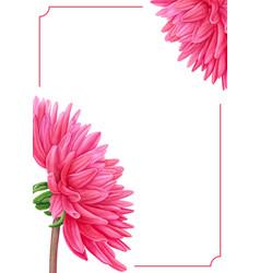 watercolor pink dahlia botanical art template vector image