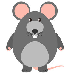 gray rat on white background vector image vector image
