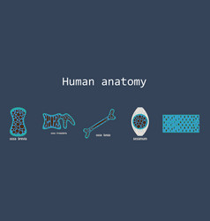 Bone structure details vector