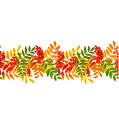 bright colourful rowan berries and leaves autumn vector image