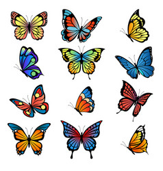 colored butterflies pictures of vector image