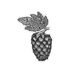 Engraving hops cone vector