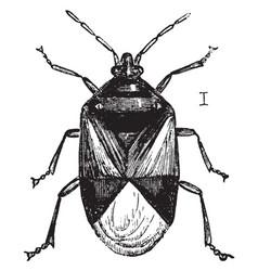 insidious flower bug vintage vector image