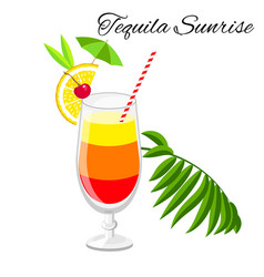 Tequila sunrise cocktail isolated on white vector