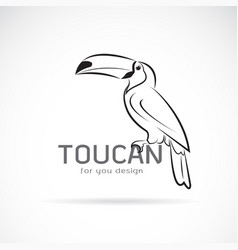 Toucan birb design on white background wild vector