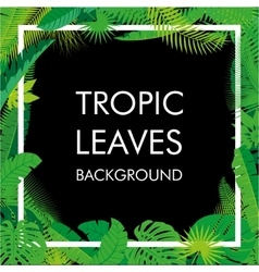 Tropical Leaves background isolate vector