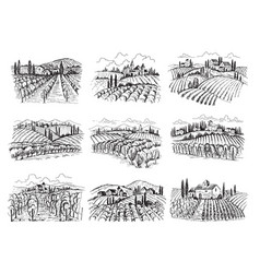 vineyard landscape farm grape fields with houses vector image