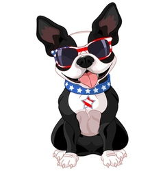 4th of July Boston Terrier vector image