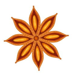 anise vector image