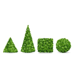 Boxwood shrubs of different topiary forms vector image