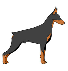 Cartoon doberman dog vector
