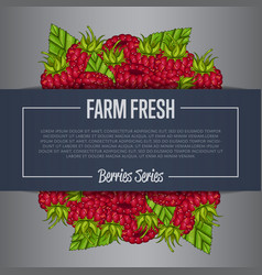 farm fresh berry banner with juicy raspberry vector image