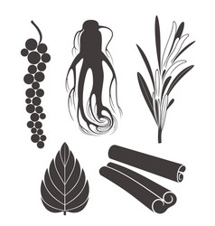 seasoning vector image