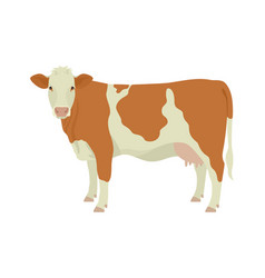 Simmental cow breeds domestic cattle flat vector