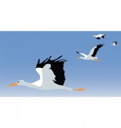 storks vector image