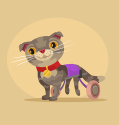 Disabled cat character in wheelchair vector