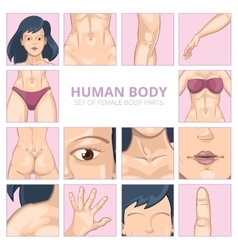Female body parts in cartoon style icons vector image