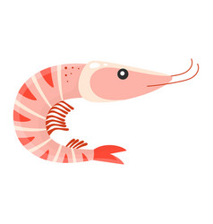 cartoon shrimp isolated on white vector image