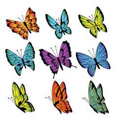Collection colorful butterflies vector