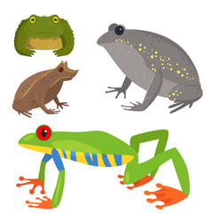 frog cartoon tropical wildlife animal green vector image