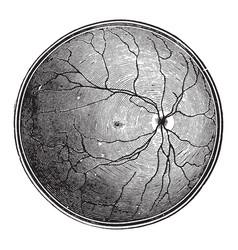 Retina blind spot vintage vector