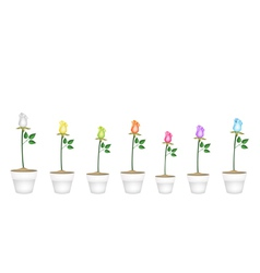 Set of Roses in Ceramic Flower Pots vector image