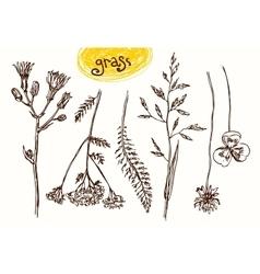 Sketch wildflower vector