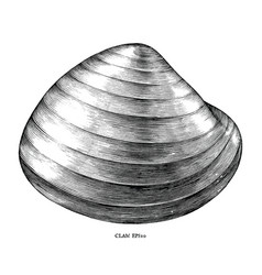 antique engraving clam black and white clip vector image