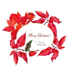 Background with red Christmas poinsettia-01 vector