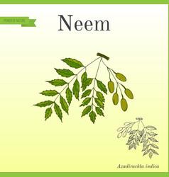 Neem tree medicinal plant vector