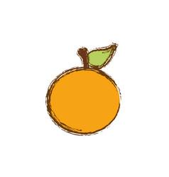 color orange fruit icon stock vector image