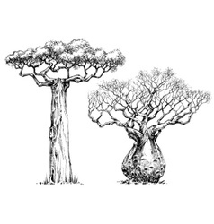 African iconic tree baobab tree vector