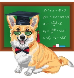 Graduated dog Pembroke Welsh corgi vector