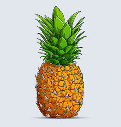 hand drawn single whole fresh pineapple isolated vector image
