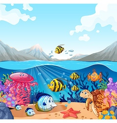 Nature scene with fish and turtle vector image